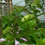 Rośliny_na_taras_Miejskie_Ziele