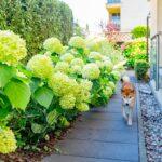 Pies w ogrodzie, projekt ogrodu