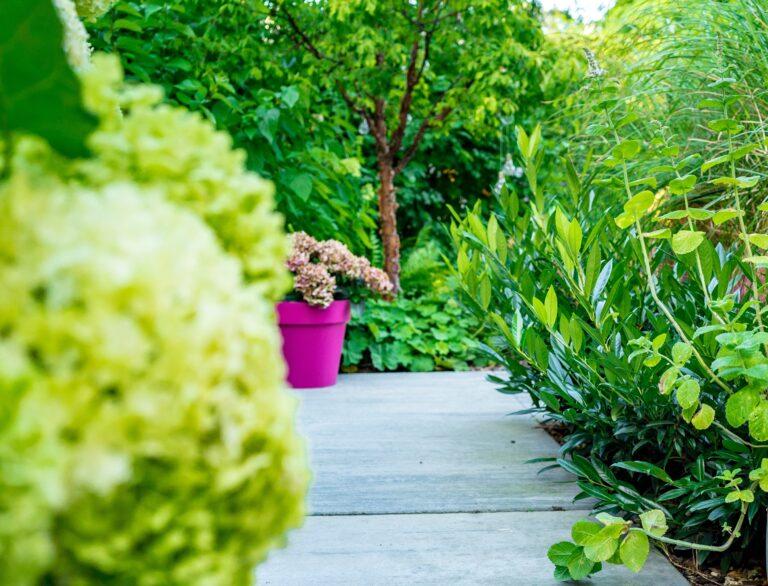 ścieżka w ogrodzie z roślinnością i różową donicą
